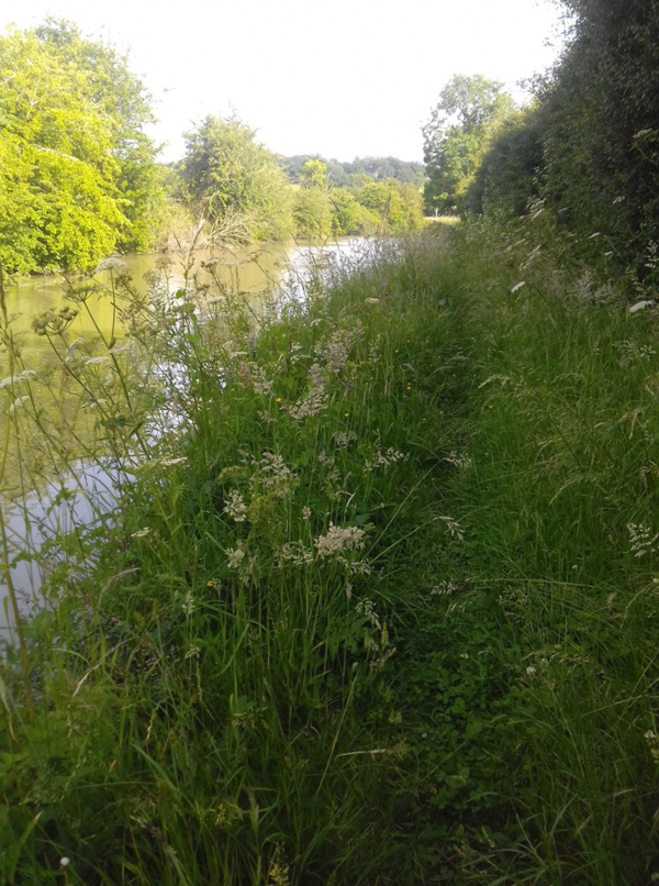 Oxford Canal trail photo from Mandy Foyster
